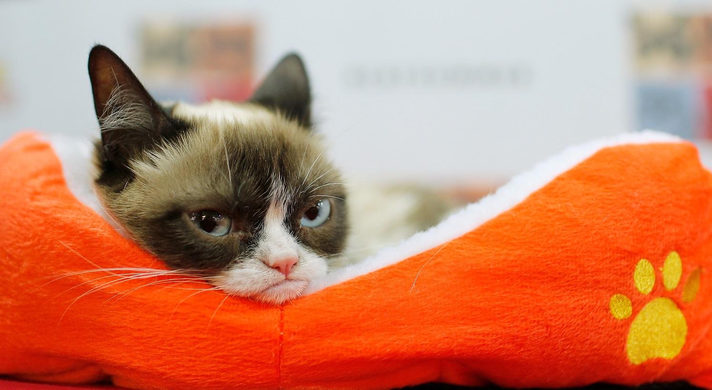 Le célèbre Grumpy Cat obtient 710 000 dollars lors d'un procès