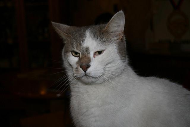 Un chat accusé de tentative de meurtre — Japon