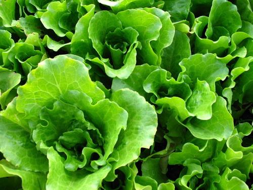 Aude: trois tonnes de cannabis retrouvés dans une cargaison de salade