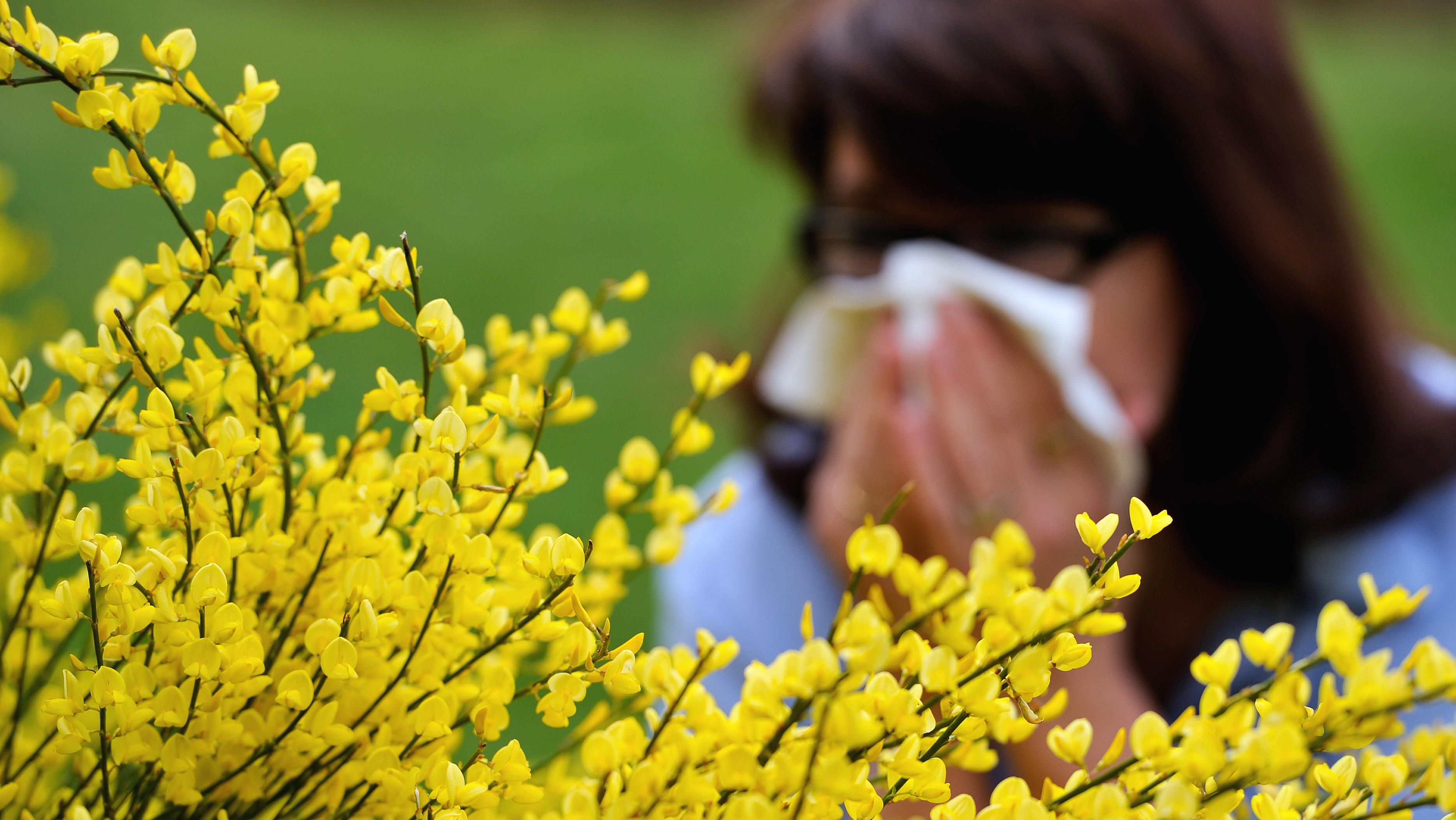 Allergies aux pollens (PHOTO D'ILLUSTRATION).