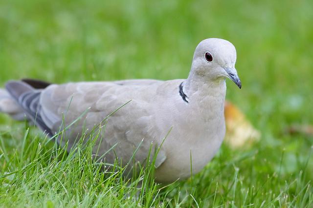 EN IMAGES - Moselle: saisie de dizaines d'oiseaux rares et protégés dans une volière clandestine