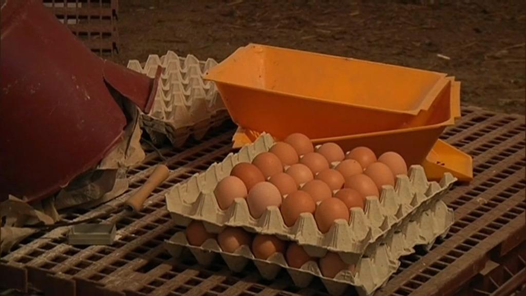 11 pays européens concernés — Les œufs contaminés