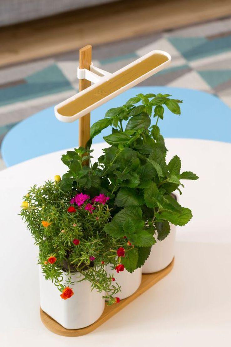 Lilo le jardin d 39 int rieur autonome sfr news for Jardin lilo