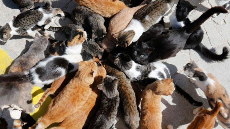 Les chats retournés à létat sauvage sont présents sur près de 99,8% du territoire australien (Photo dillustration des chats au monastère de Tala,
