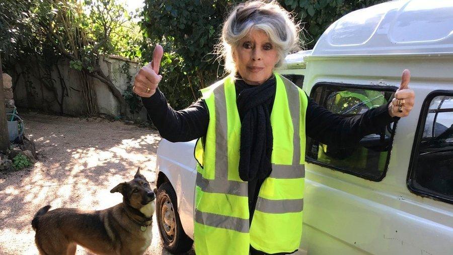 Brigitte Bardot en gilet jaune