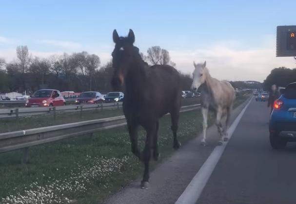 Aix-en-Provence: deux chevaux lâchés au milieu des voitures sur l'autoroute