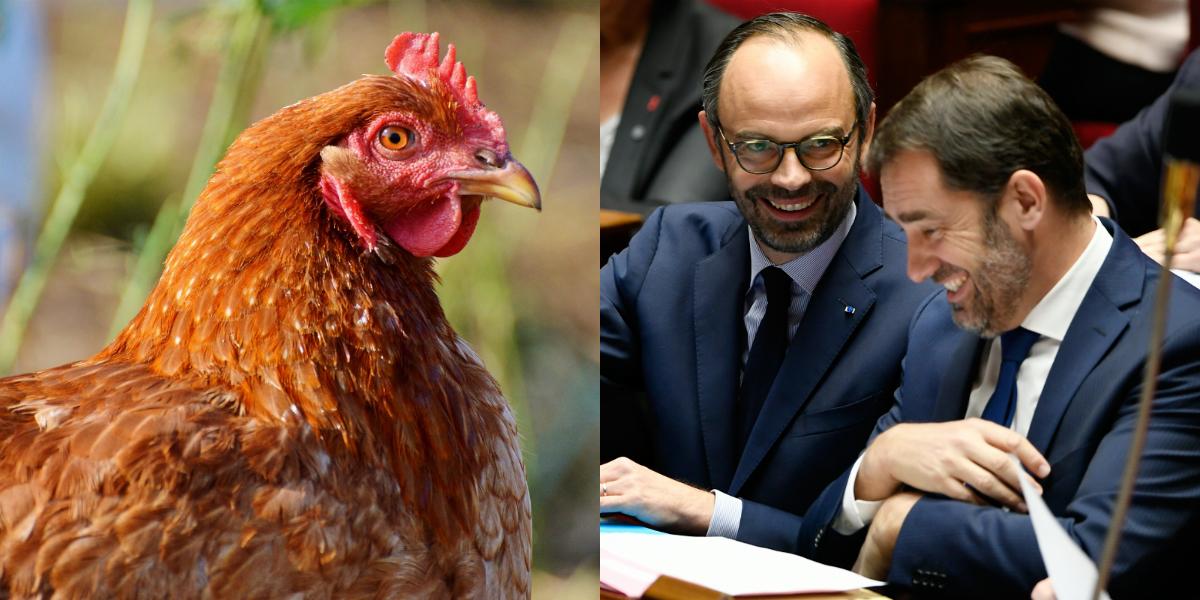 Quand Édouard Philippe offre un poulet vivant à Christophe Castaner