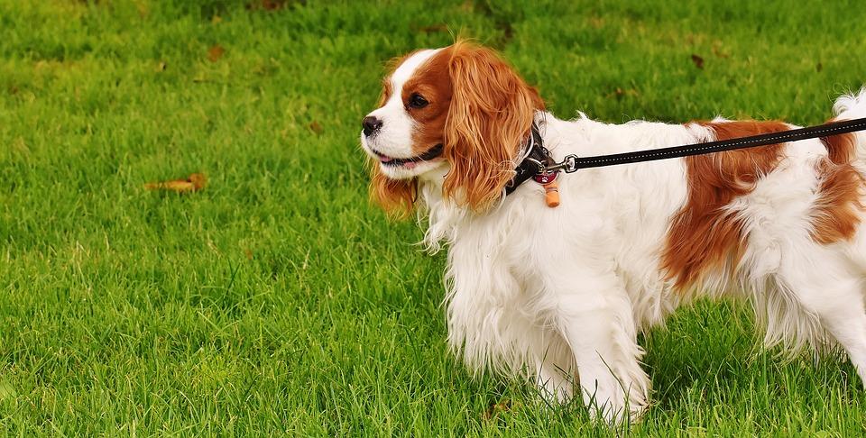 Nancy: un septuagénaire retrouvé en partie défiguré par son chien