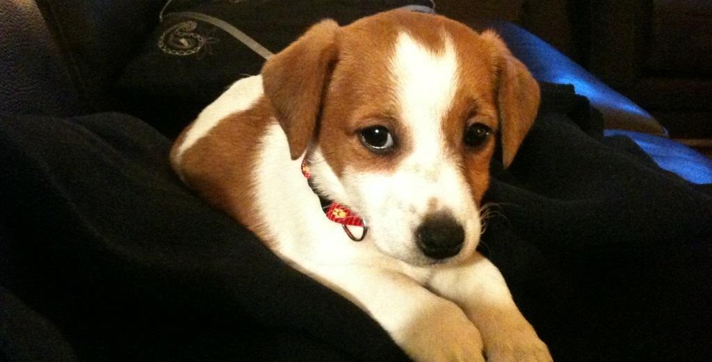 6 mois pour avoir battu son chien — Val-de-Marne