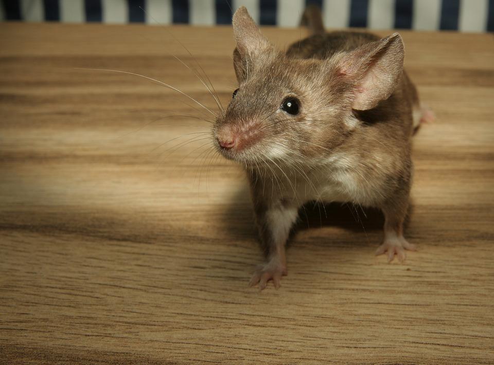 Ils découvrent un cadavre de souris dans leurs haricots surgelés — Marseille