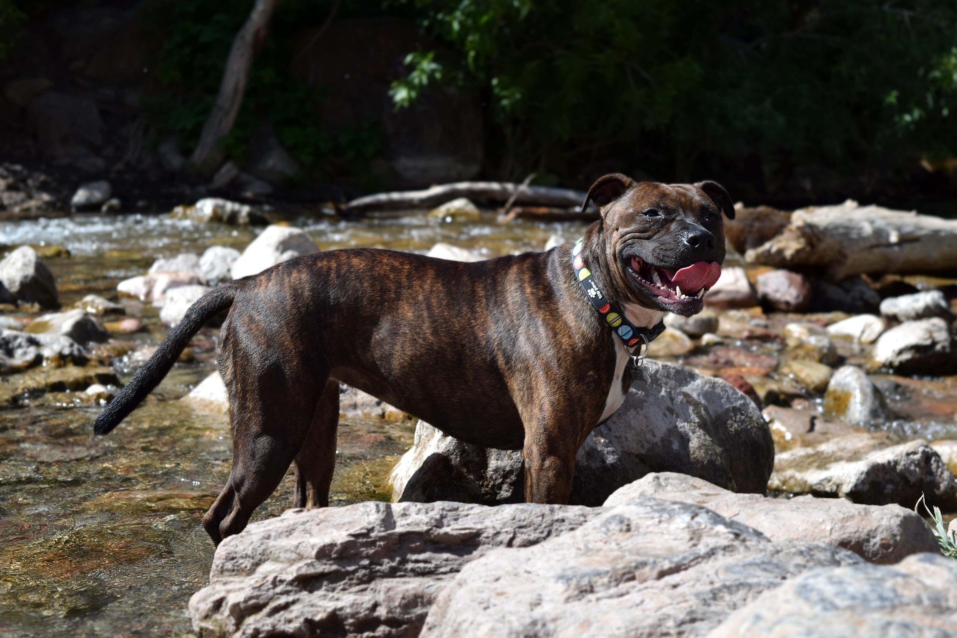 Un chien ingère du crack et attaque mortellement son maître — Angleterre