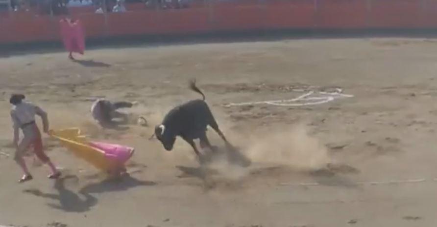 Un militant anti-corrida blessé par un taureau dans l'arène — Carcassonne
