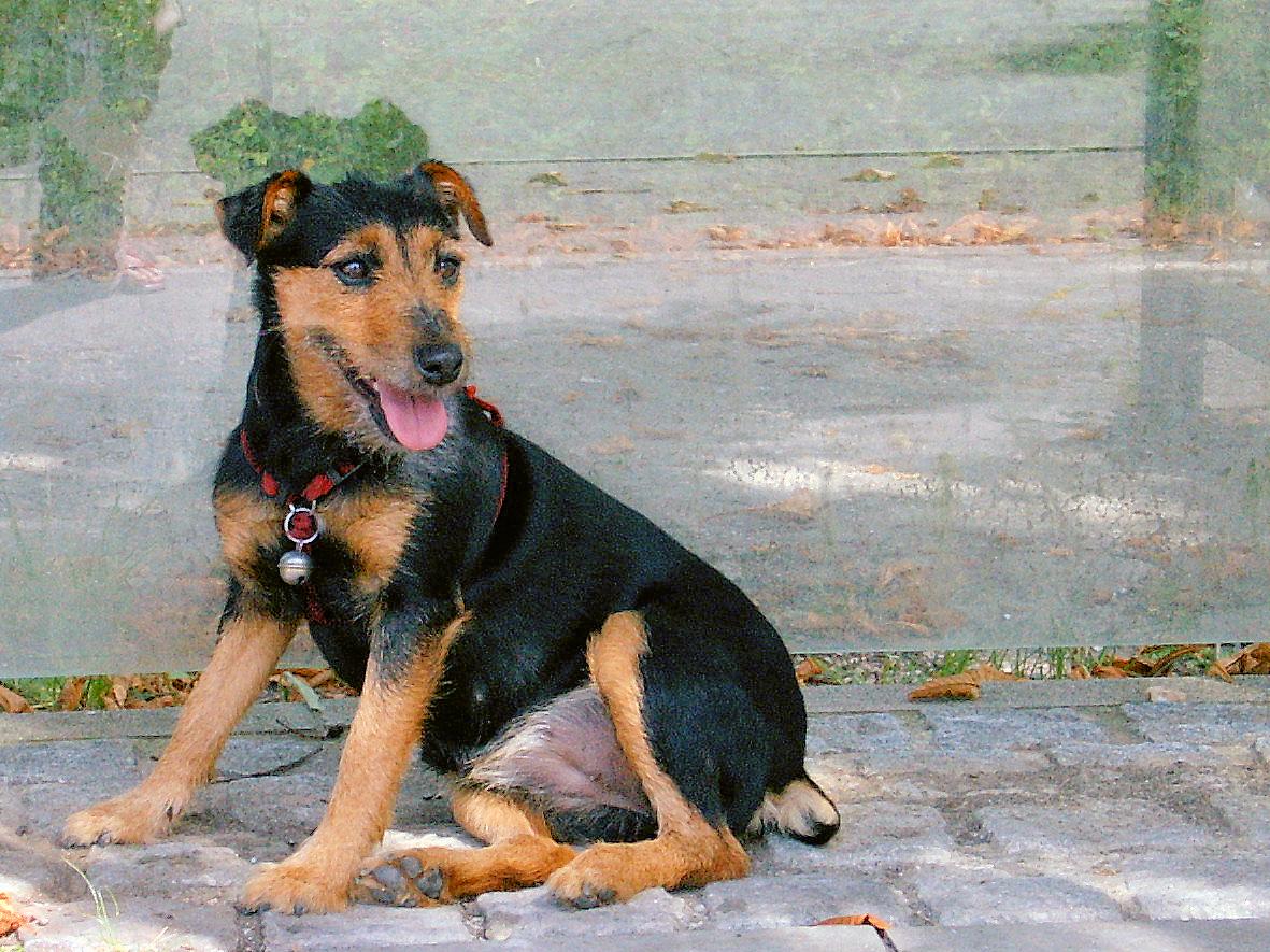 Relaxée pour avoir tué le chien qui a attaqué son chat — Montpellier